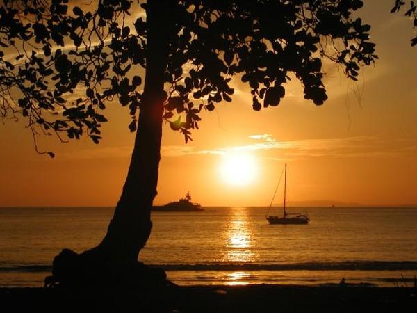Palmiye manzara resimleri çok güzel romantik deniz manzaralır