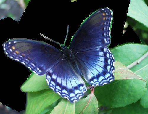 Gifs papillons page 4 - Image papillon gratuit ...