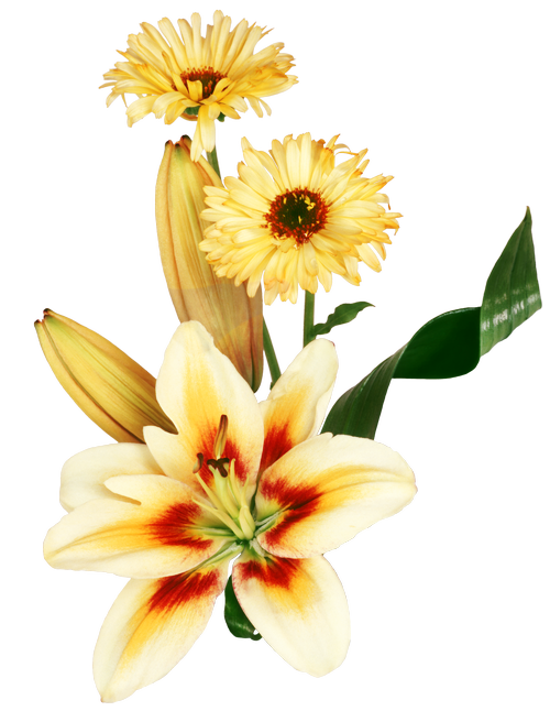tubes fleursjaunesoranges