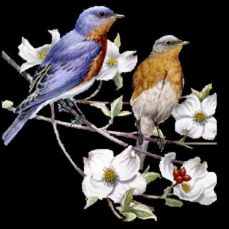 les oiseaux ont soifs comment faire ? 266dd288