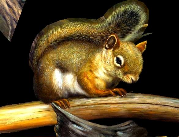 tubes écureuils