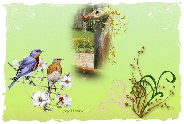 fond ecran oiseaux