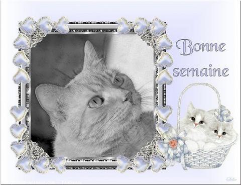 bonjour - Page 4 544d4a81