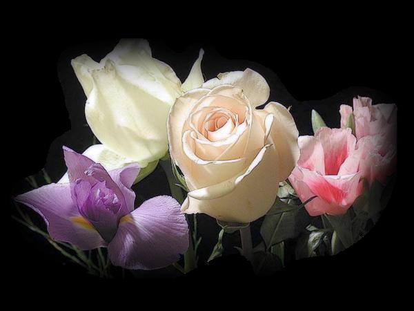 tubes roses
