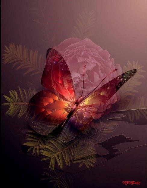 dans fond ecran papillon 64a834e0