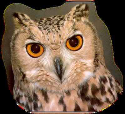 Tubes oiseaux - Thème : chouettes/hiboux