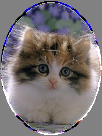 yavruları resimleri yeni eklenen kedi yavrulari resimleri yeni