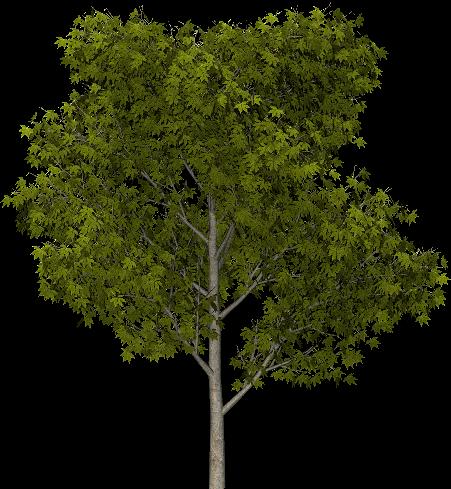 Tubes arbres for De l arbre au meuble