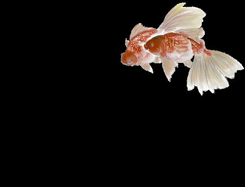 tubes poissons