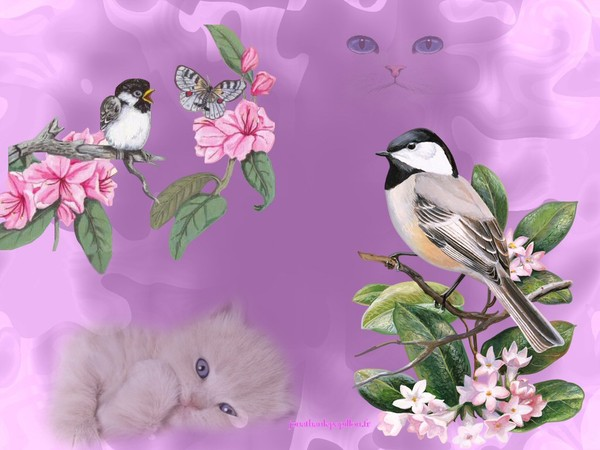 Fonds d 39 cran oiseaux fonds d 39 cran jardins japonais for Jardin japonais fond d ecran