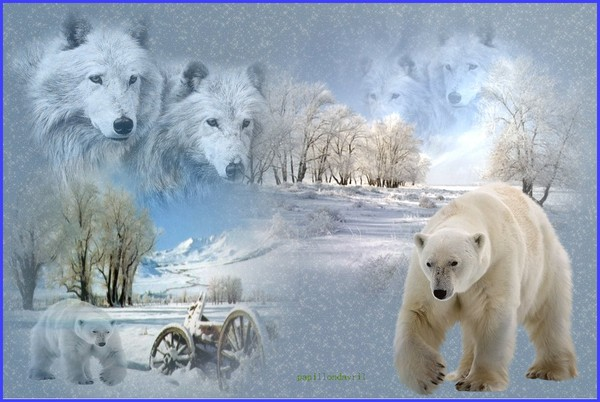 Fonds ecran hiver for Fond ecran hiver hd