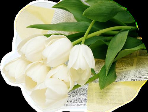 Tubes fleurs blanches