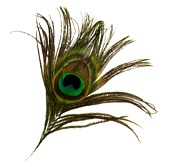 Peacock feather krishna png - photo#39