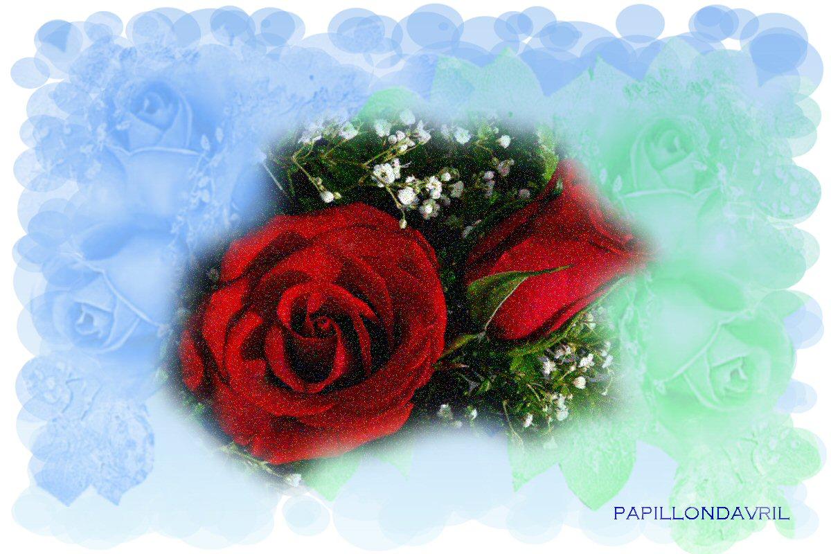 Fonds d ecran avec roses page 7 for Fond ecran rose