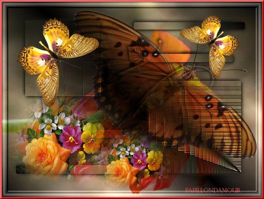 Fonds ecran papillons for Enregistrer image ecran