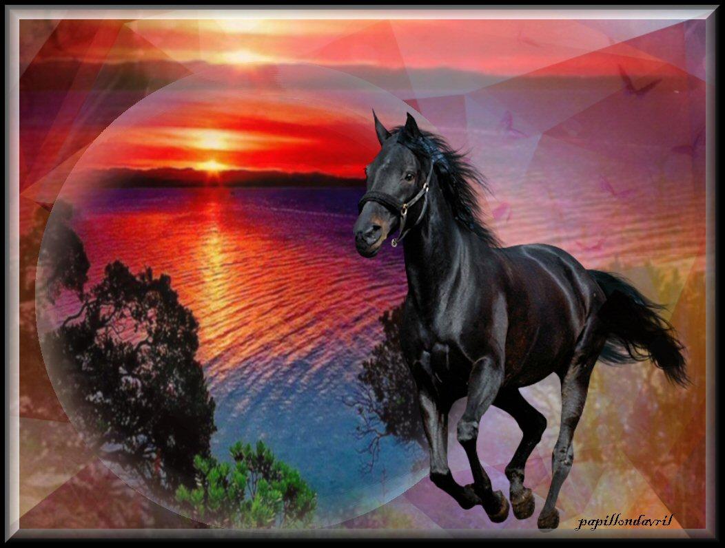 Fonds ecran chevaux for Photo de fond ecran