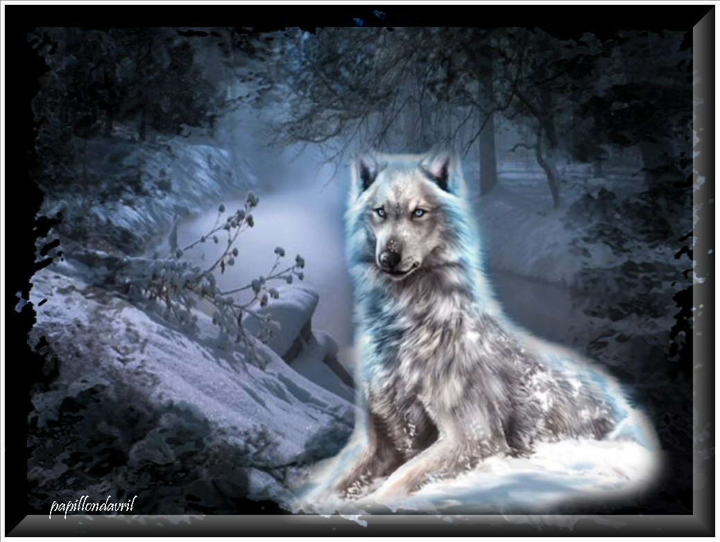 fonds ecran loups
