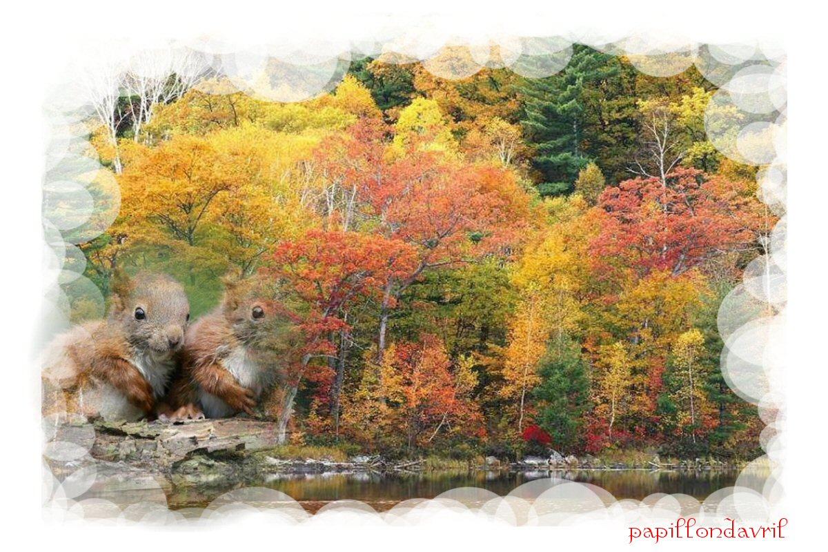 foto de fond ecran automne