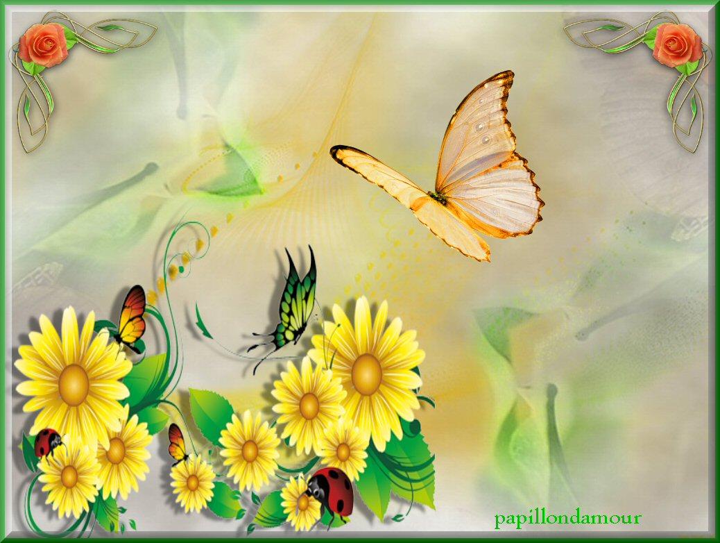 Fonds ecran papillons - Image papillon gratuit ...