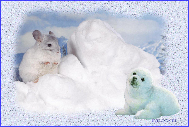 Fond ecran hiver noel page 5 for Fond ecran hiver animaux
