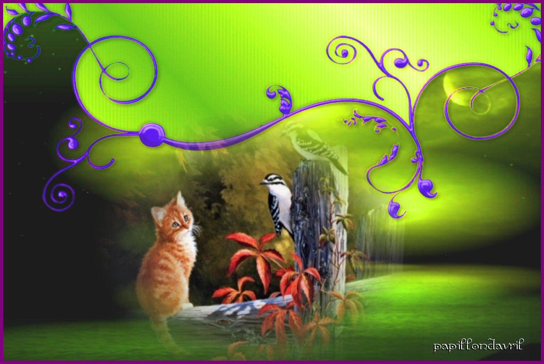 Fonds ecran chats for Enregistrer image ecran