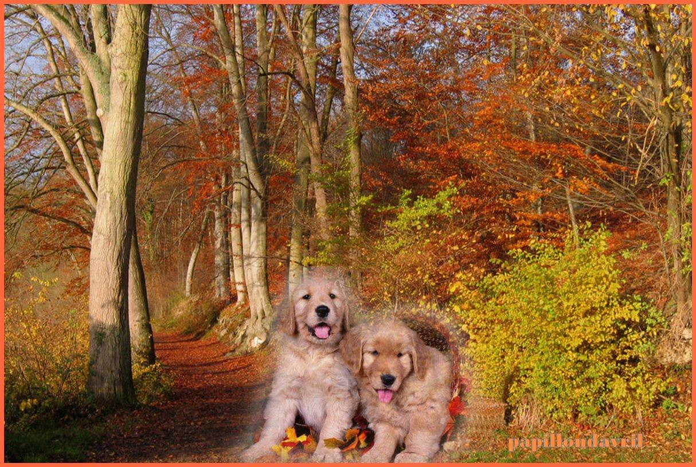 Fonds ecran automne page 11 for Enregistrer image ecran
