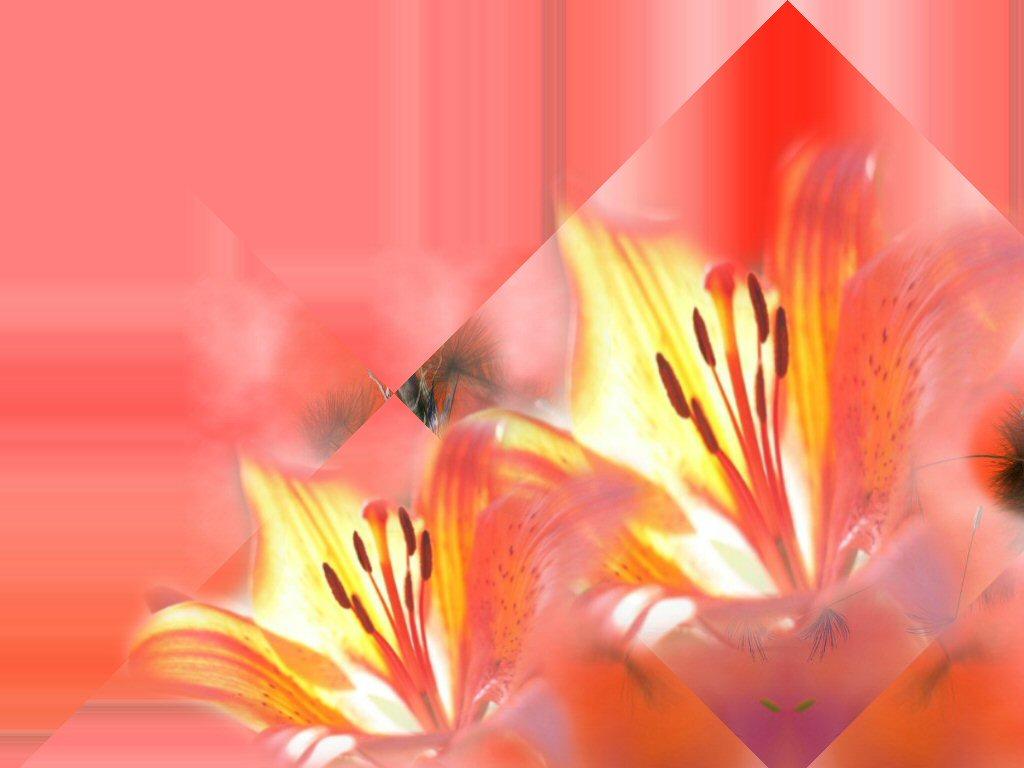 Fonds pour vos creas fleuri for Image pour fond