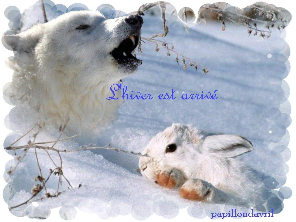 Fond ecran hiver noel for Fond ecran hiver animaux