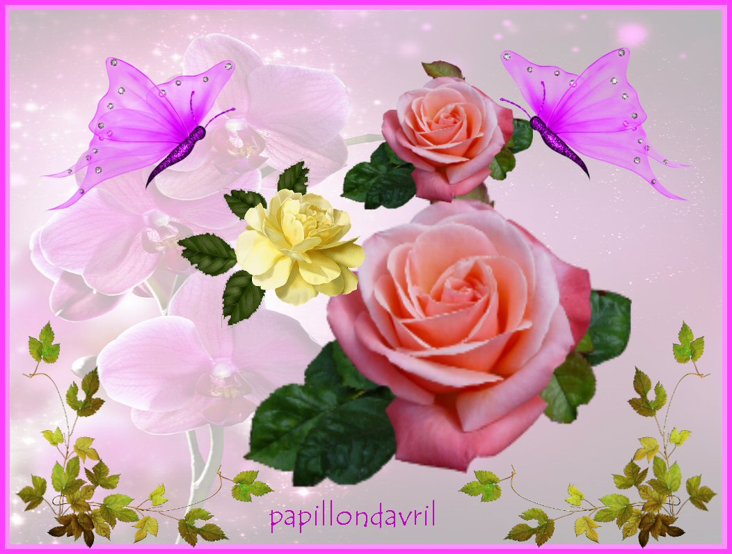 Fonds d ecran avec roses page 2 for Fond ecran rose